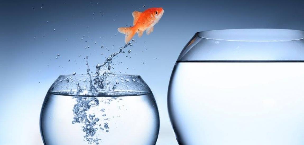 Esti multumit de acvariul in care inoata firma ta?